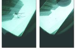 汽车玻璃修复效果展示