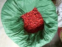 鄂西红豆种子