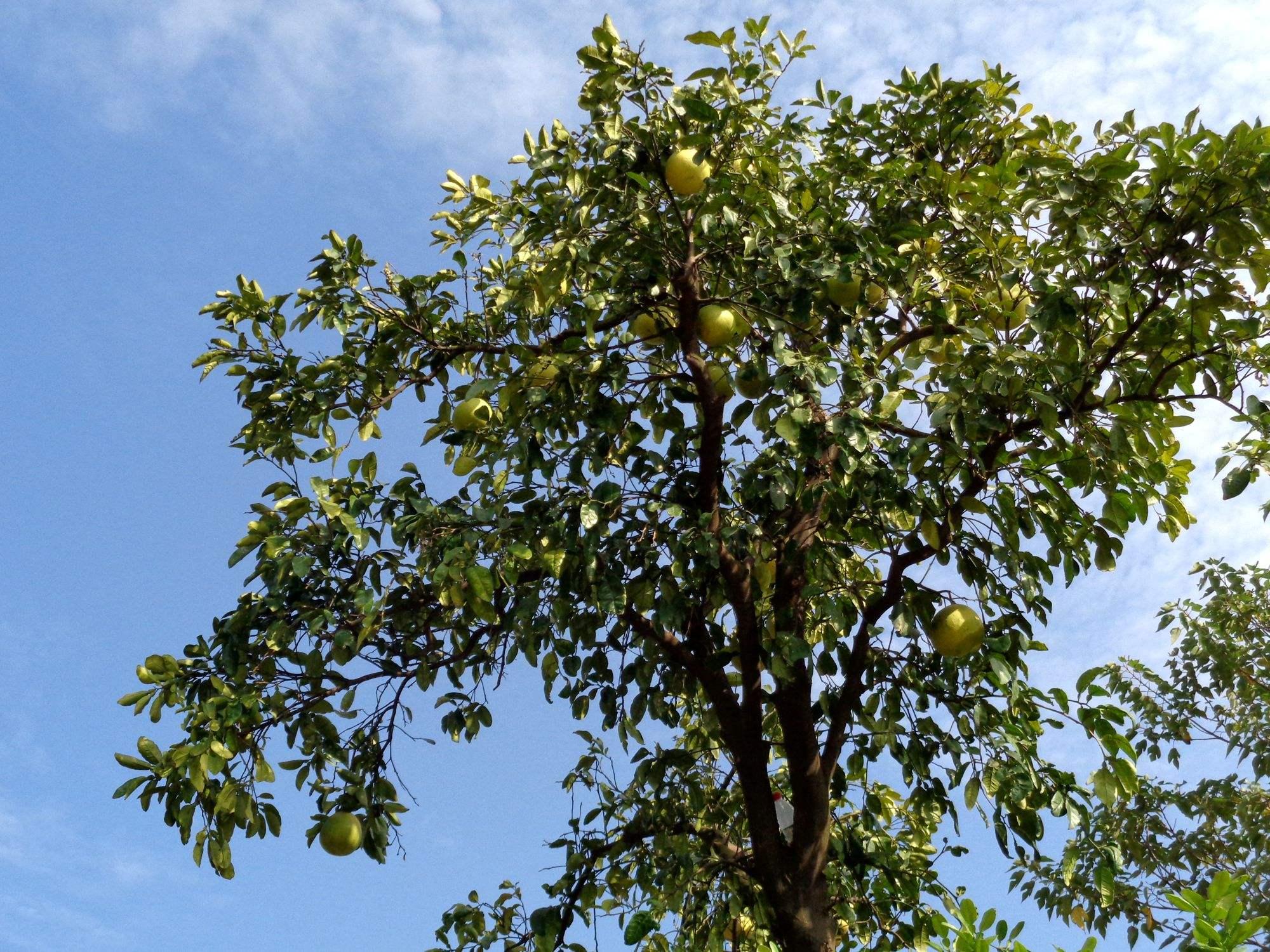 微信头像风景牡丹树