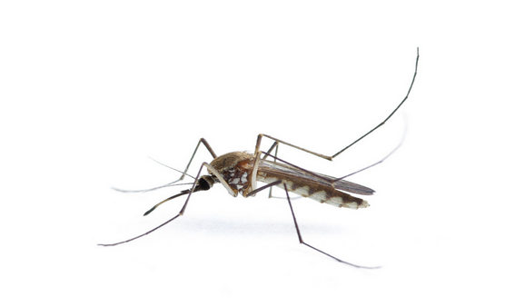 廈門蚊子防治