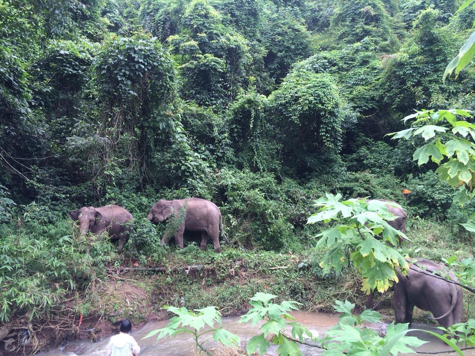 首页 景区介绍    西双版纳野象谷位于景洪市以北36公里处,213国道线