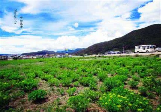 香格里拉蓝月山谷