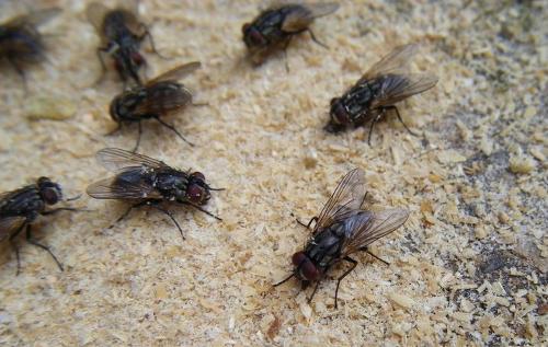 珠海专业苍蝇防治公司