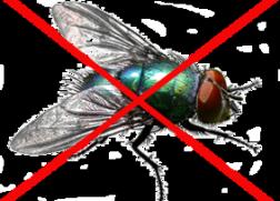 专业灭苍蝇公司