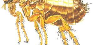 珠海害虫防治