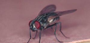 苍蝇防治公司