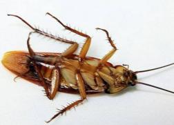 消杀蟑螂中心