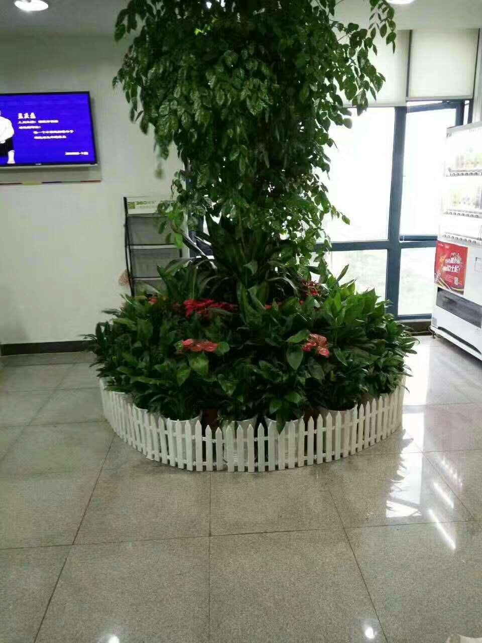 杭州绿植租赁:农业银行大堂植物装饰