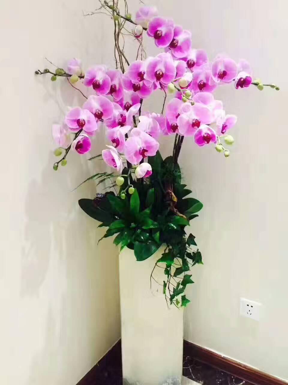 杭州花卉租赁:绿源大酒店大堂植物装饰