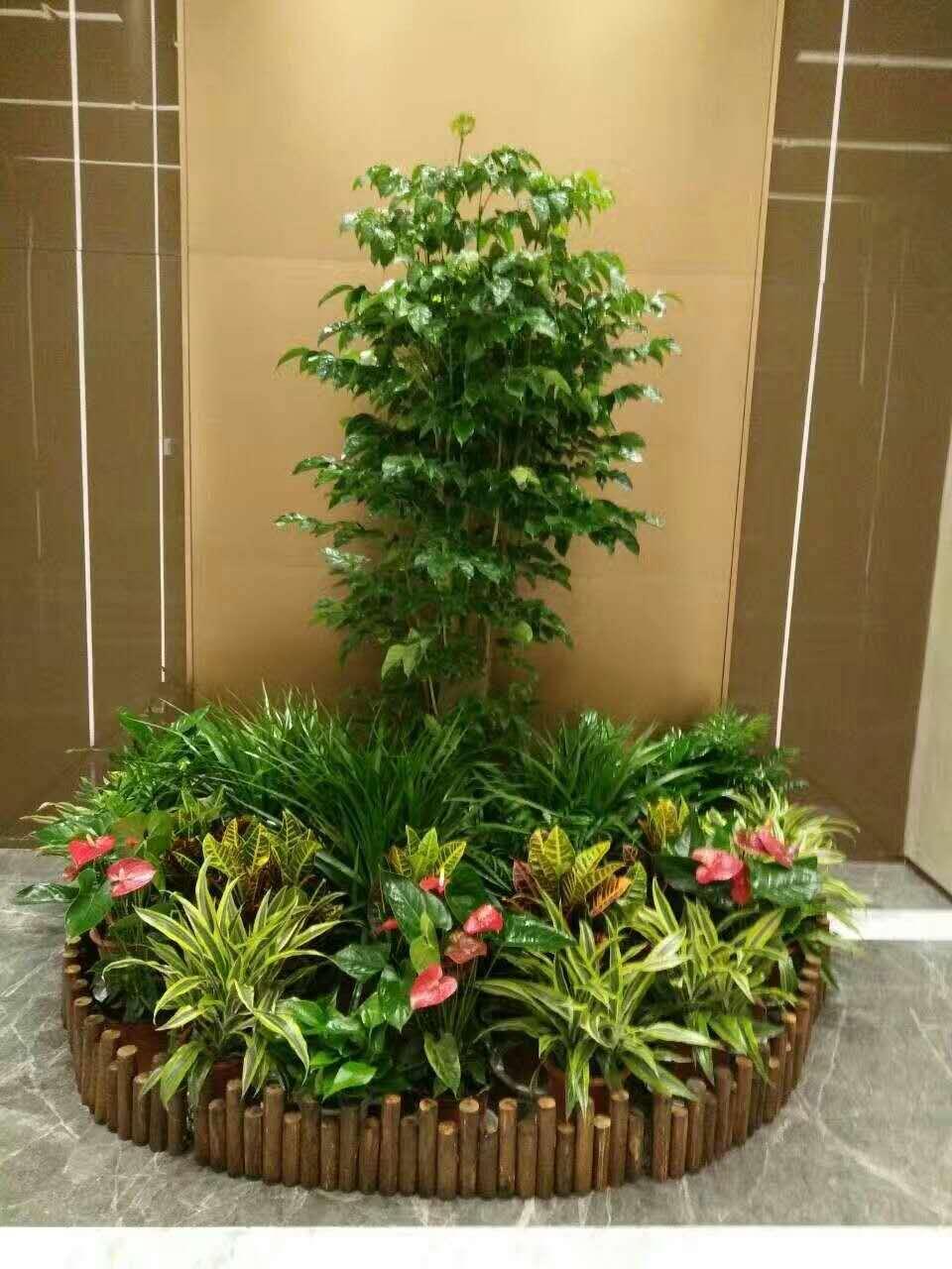 杭州植物租赁:与杭州创新科技有限公司合作