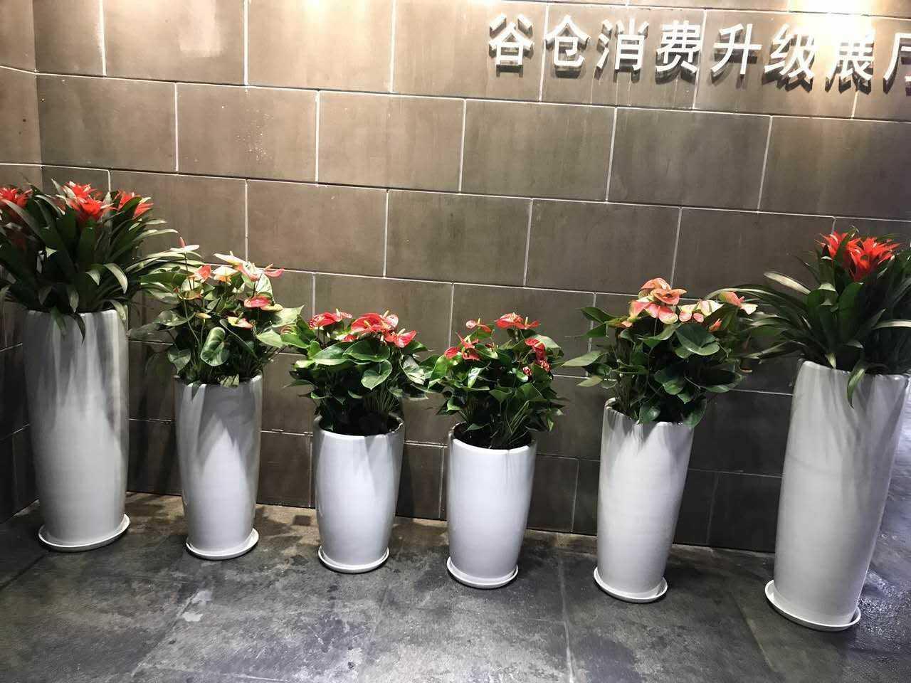 杭州绿植租赁:谷仓展会绿植租赁