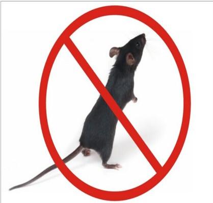 宁波ktv灭鼠方法