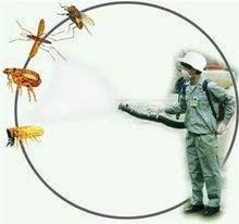 厦门专业除蚊蝇