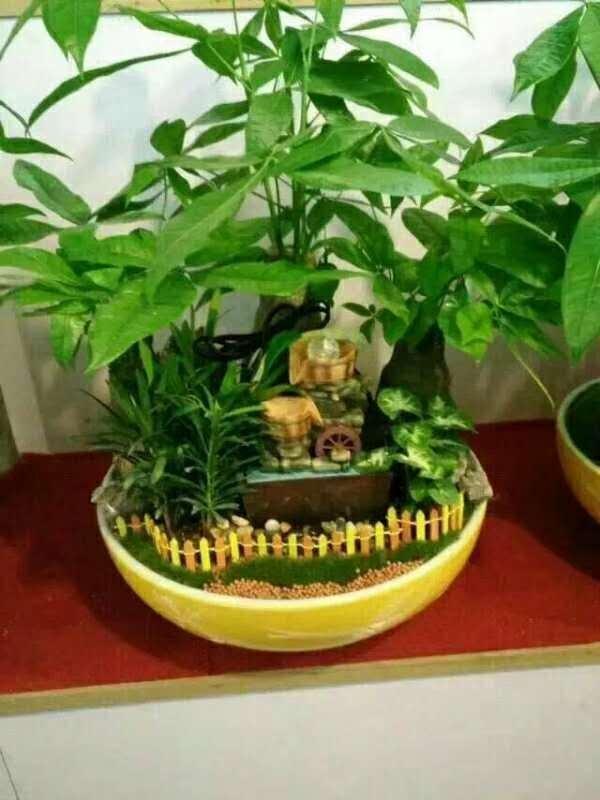 杭州花卉租赁:盆栽怎样将有土栽培改为无土栽培
