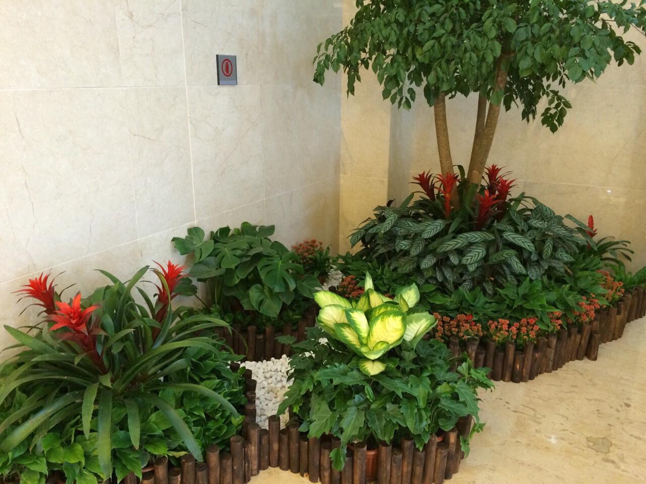 植物造型2