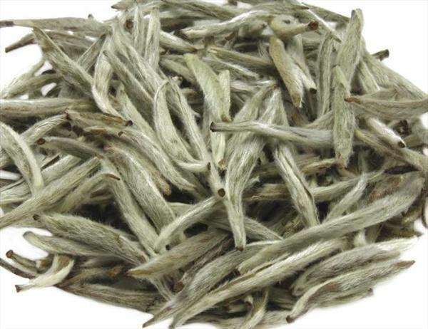茶叶产品-福鼎白茶