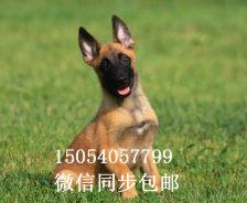 北京pk10彩票官网