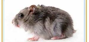 珠海杀虫灭鼠|珠海杀老鼠
