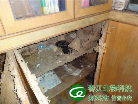 ?房屋裝修白蟻預防