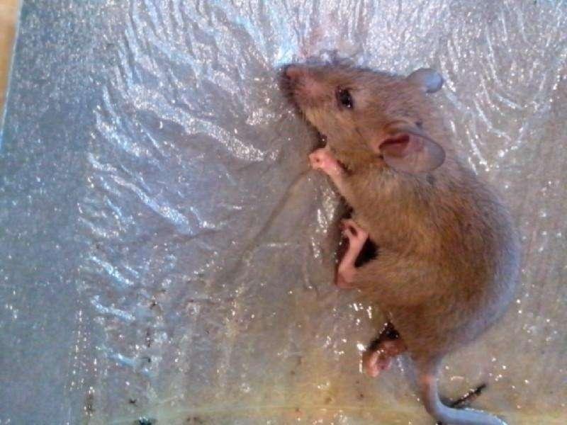 珠海杀虫灭鼠