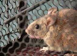 珠海灭鼠-珠海市杀虫灭鼠工程