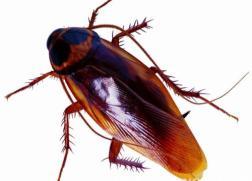 珠海灭杀蟑螂
