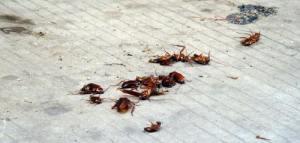 珠海灭蟑螂工程|珠海灭杀蟑螂