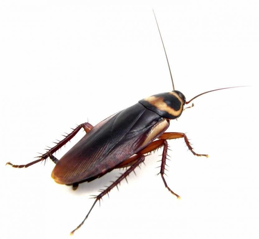 澳门灭杀蟑螂电话