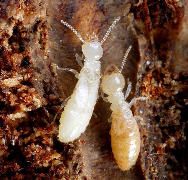 如何消灭白蚁方法 专家四招教你怎么防治