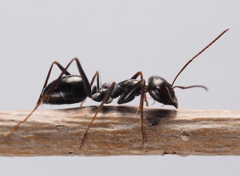 上海灭蚂蚁