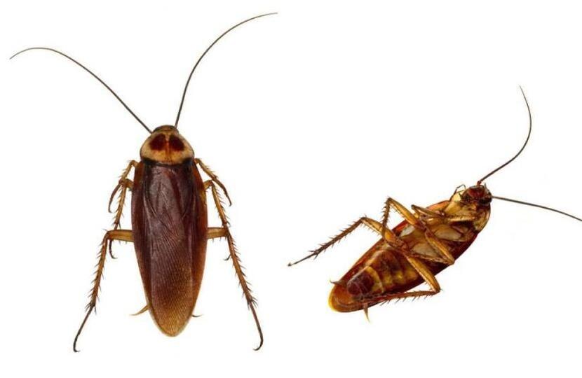 上海灭蟑螂