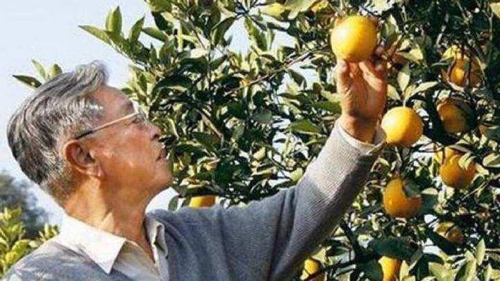 褚橙創始人褚時健去世,享年91歲