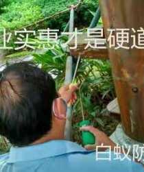 香港灭杀白蚁工程