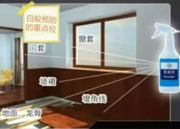 香港白蚁防治-香港灭杀白蚁工程