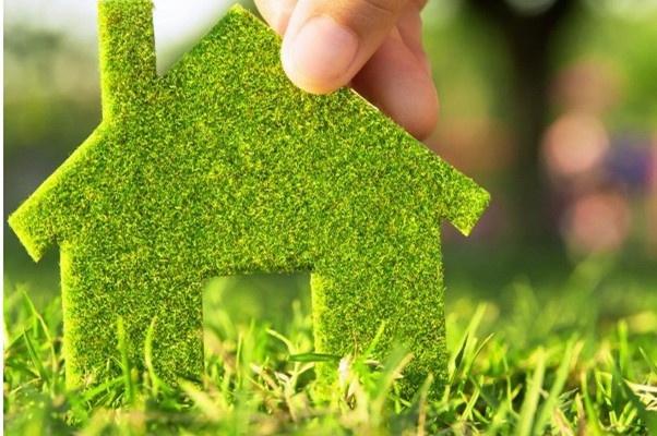 「甲醛克星」在家居装修中,你会注意环保方面的问题吗?