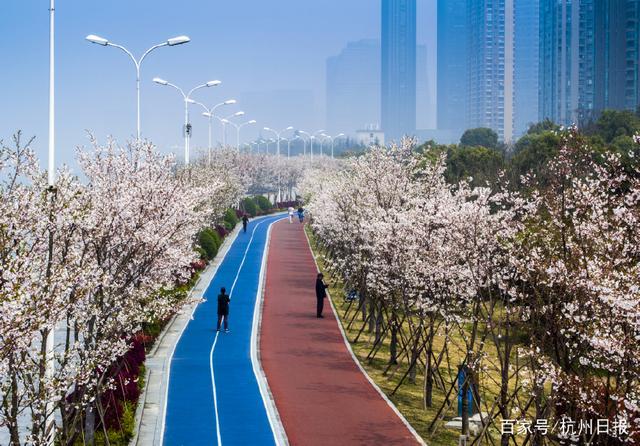 杭州今年要新建、提升钱塘绿道约250公里