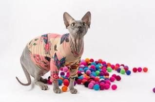 网上传无毛猫被纹身,网友以为主人虐猫,原来另有隐情